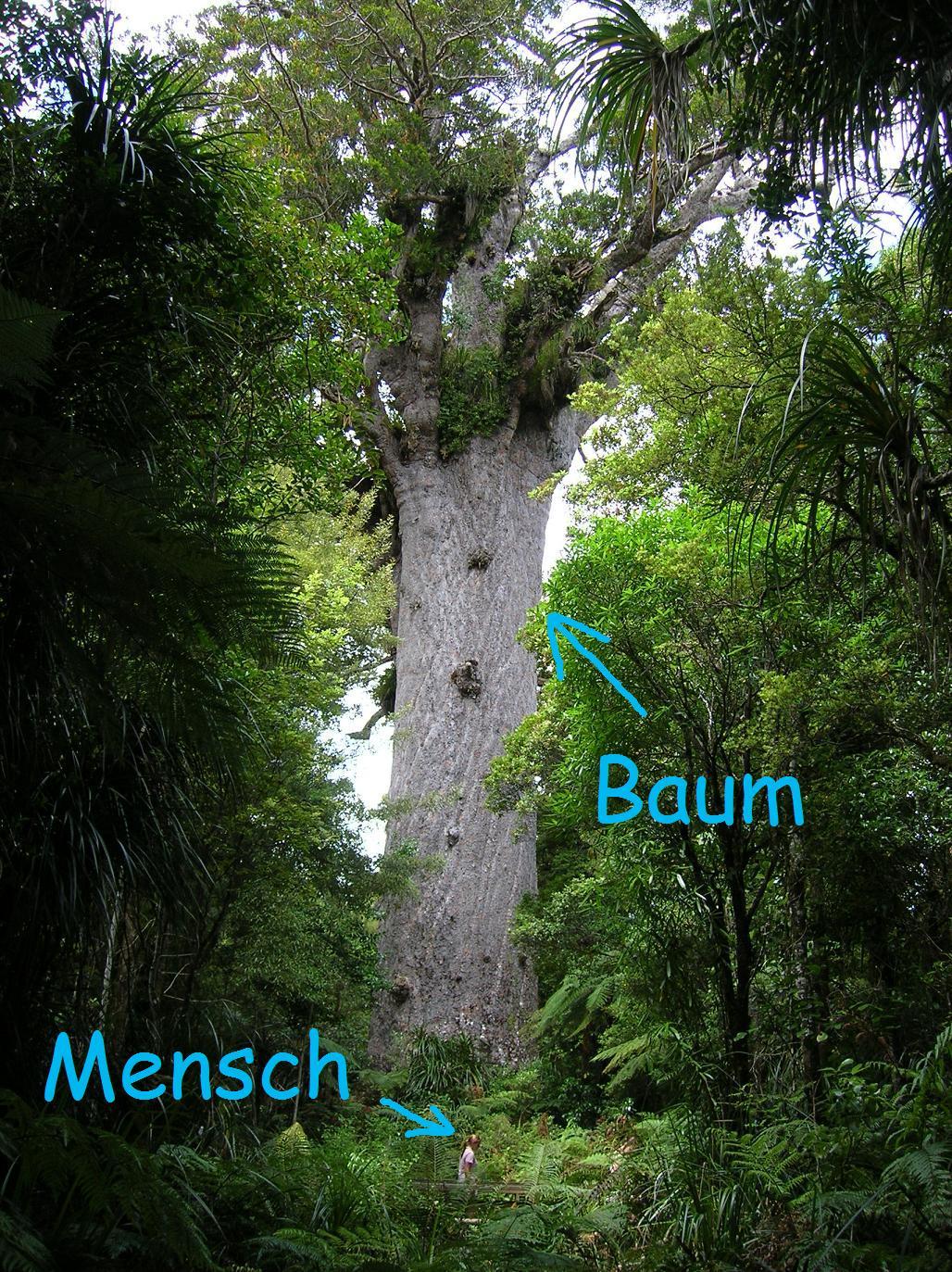 Der Gott des Waldes