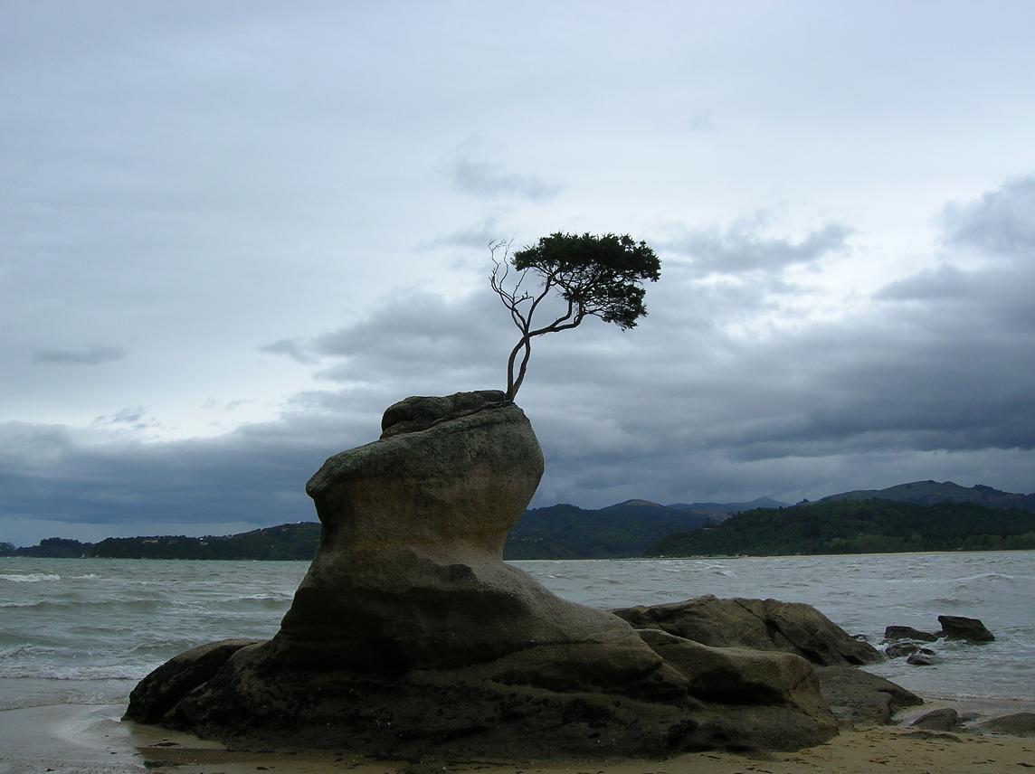 Ein Bonsai-Baum in freier Wildbahn