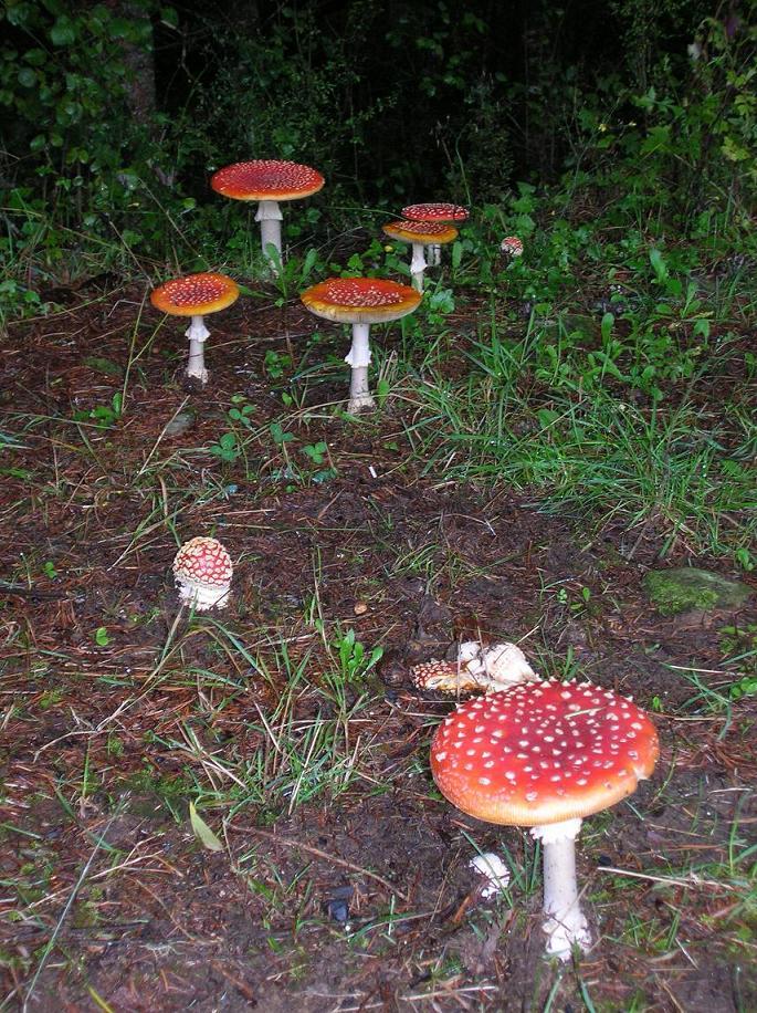 Einige freilebende Pilze