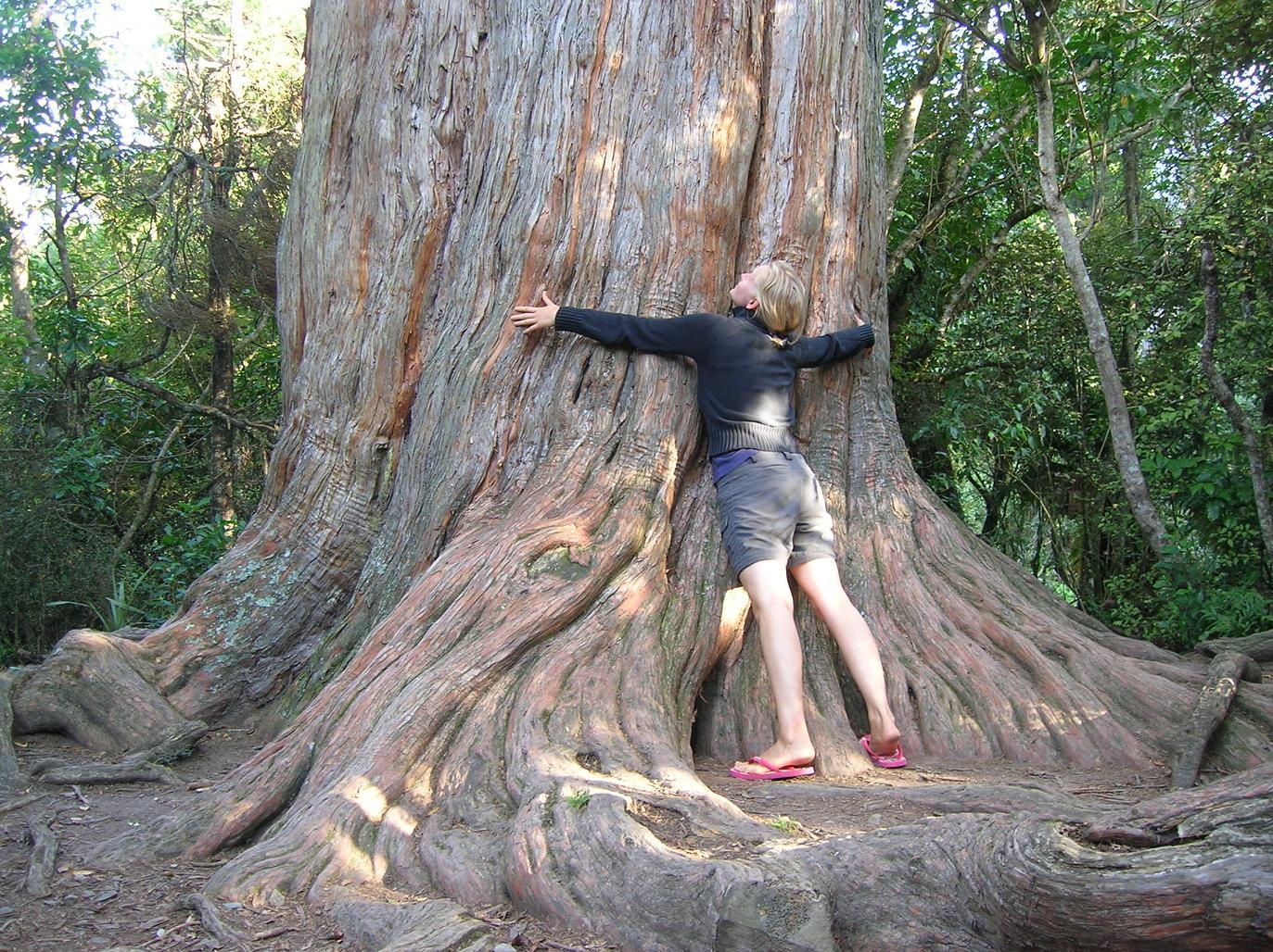 Baum mit Nils verwechselt. Kann schon mal passieren …
