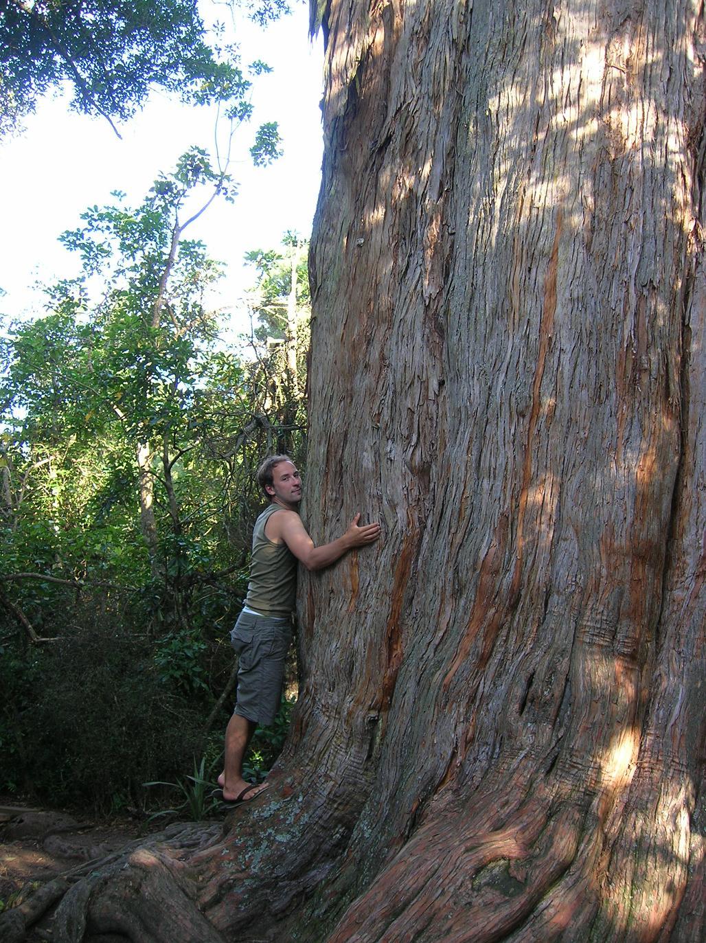 Baum mit Babs verwechselt. Auch das kann passieren …
