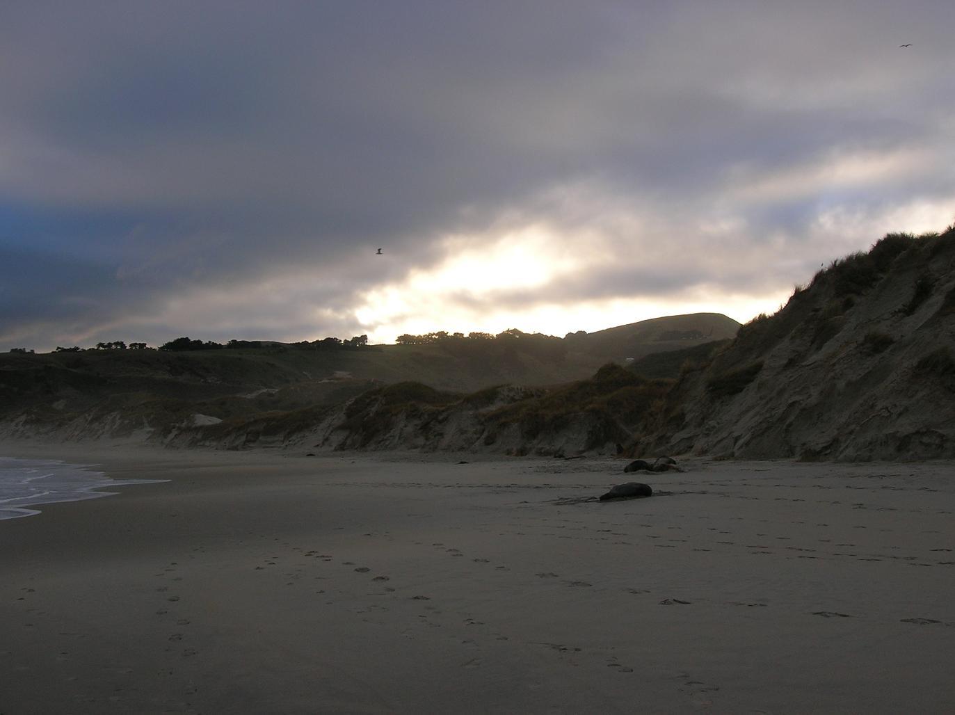 Seelöwen mit Seemöwen