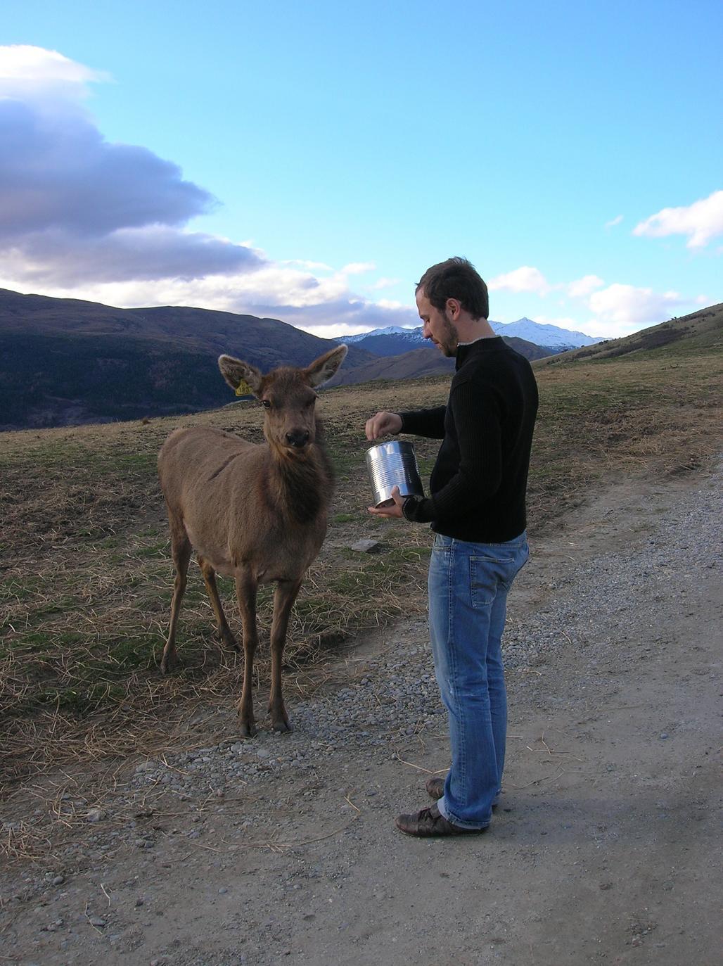 Ein X-beiniger Reh-Hirsch