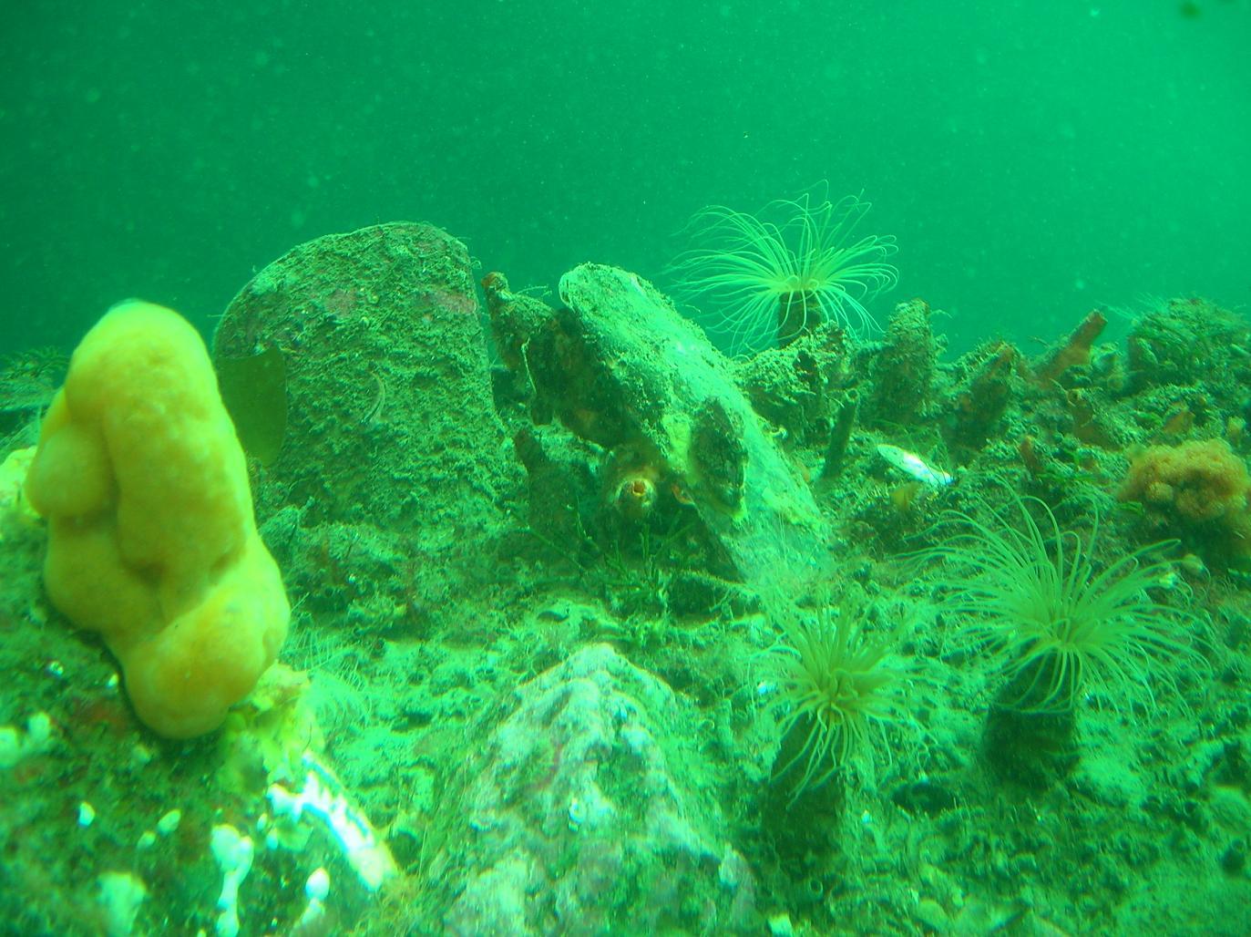Der Milford Sound von unten