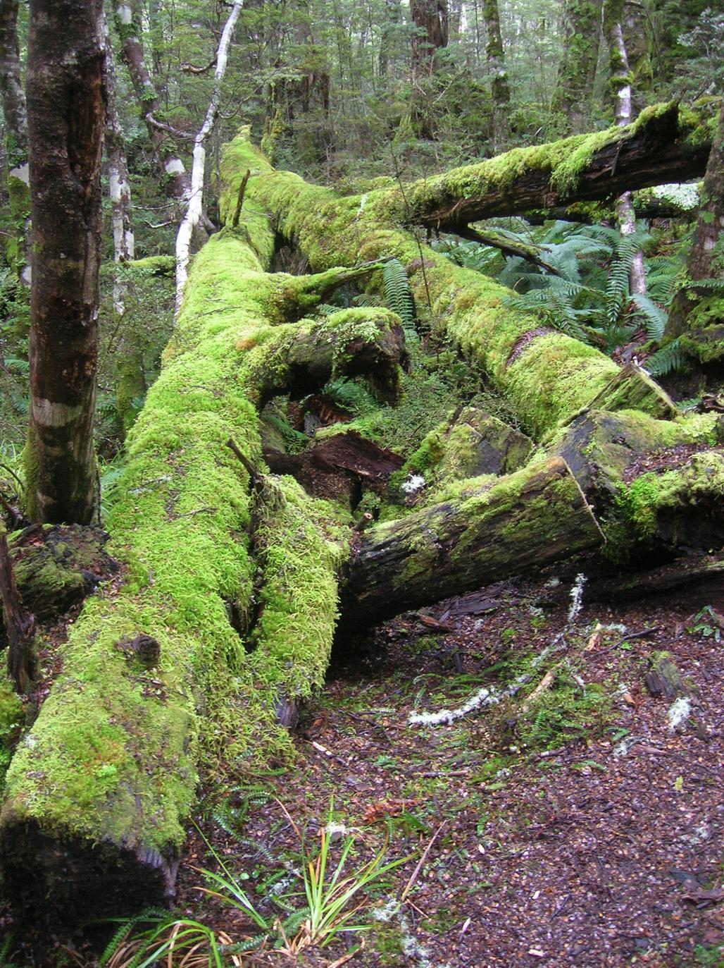 … im Walde