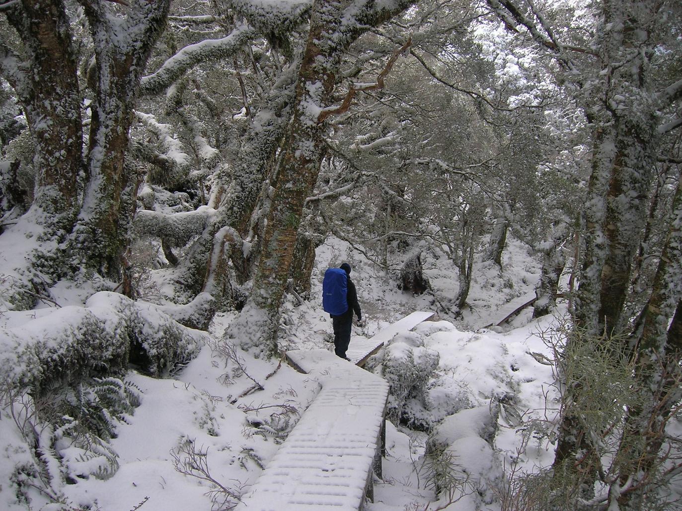 Ein Waldwanderweg
