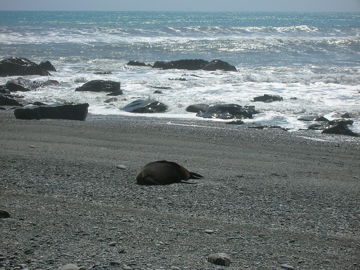 Was Robben tun wenn keiner zusieht